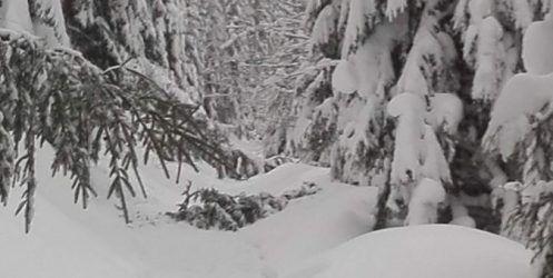 Śnieżnych ferii